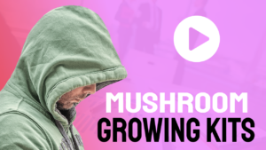 Mushroom Growing Kits For Friends And Family